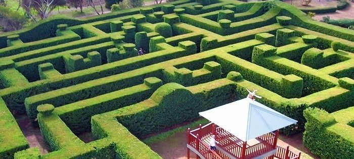 Top 10 Things to do Margaret River: #7 Amaze'n Maze #MargaretRiver #WesternAustralia #Top10ThingsToDo #ExperienceOzNZ #WhatWillYouDo #Australia #travel #destination
