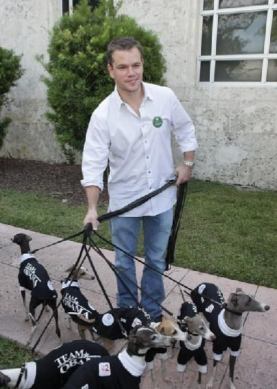 Matt Damon walking a herd of Italian Greyhounds who all seem to be endorsing Obama... seems normal, right?