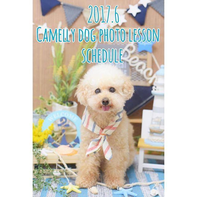 **ご予約スタート🐻📷 Camelly 6月 dog photo lessonスケジュール 色々なテーマでレッスンしてます♫ ・ ◎6月11日(日)funwari ajisai photo ①13:00-15:00 ②15:00-17:00 紫陽花と愛犬をふんわり可愛く撮影するレッスンです。 * ◎6月25日(日) funwari ajisai photo ①13:00-15:00 ②15:00-17:00 紫陽花と愛犬をふんわり可愛く撮影するレッスンです。 ・ ・ ***** ・ *グループレッスン1レッスン約120分/1組 ¥4000(税込) *約120分間のグループレッスンです。 (最小3名から開催。最大6名さままで) *場所はお申し込み後お知らせいたします。(名古屋市内公園) *オリジナルテキストを見ながら実践して覚えるレッスンです。 *はじめましてでもご安心してご参加ください。 *雨天中止。ご都合が合えば他のレッスンにお振替いたします。 *キャンセルは振替のみお受けさせていただきます。(ワンちゃんの体調不良などはご相談ください)…