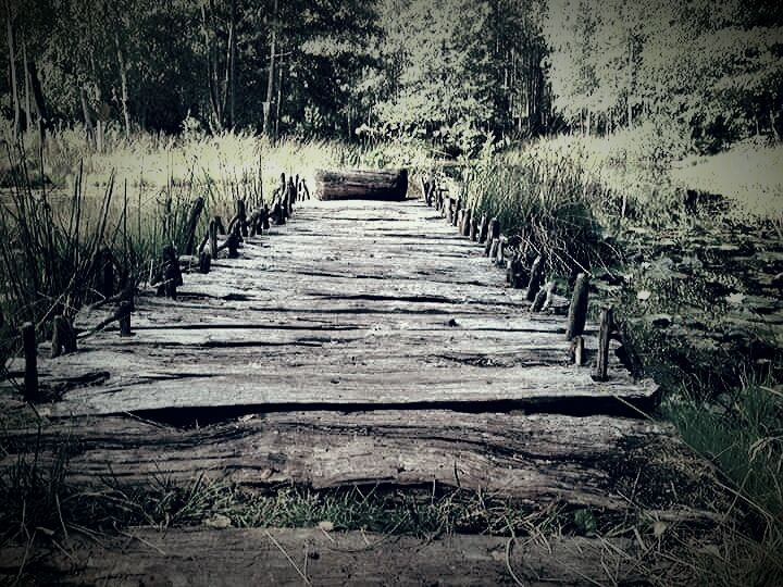En fantastisk damm, i skogen, vid Vitlycke museum. #vitlycke #damm #sjö #brygga #näckrosor #vass