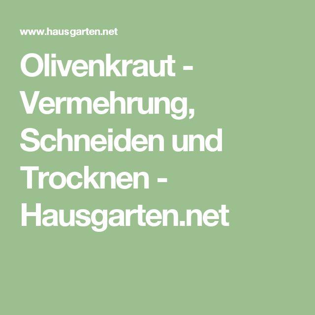 Olivenkraut - Vermehrung, Schneiden und Trocknen - Hausgarten.net