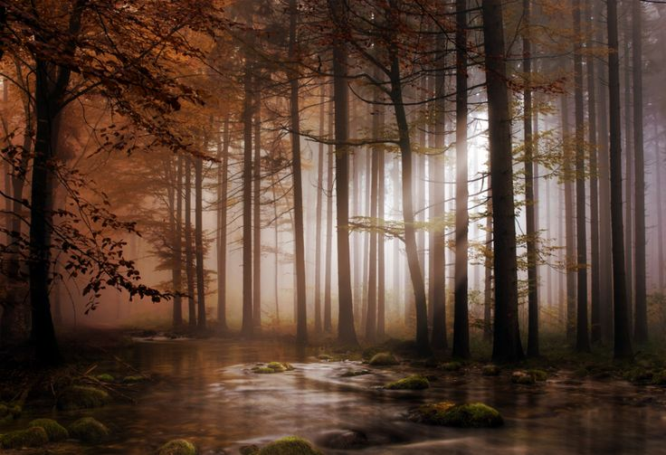 Where Magic is Born..Emeralds Depth, Art Photography, Deviantart Gallery, Fantasy Forests, Art Prints, Foggy Forest, Trees, Nature Beautiful, Awesome Stuff