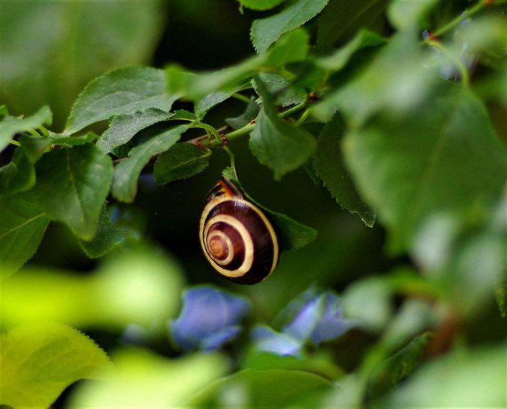 https://flic.kr/p/Y74Xfe | snail_tree