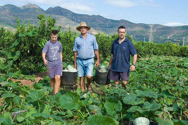 La familia en los campos de cultivo Naranjas Marisa