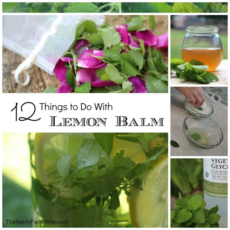 ***stuff grows like crazy it smells great taste great and its beautiful... ***12 Things to Do With Lemon Balm