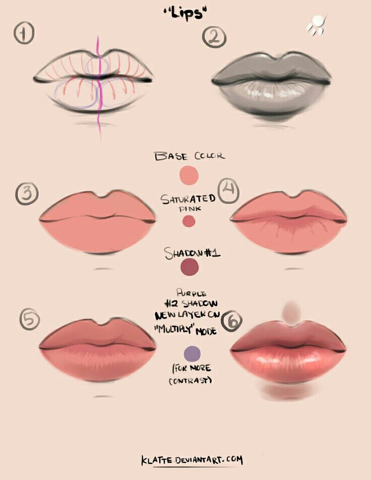 Anatomy Of Lips And Mouth