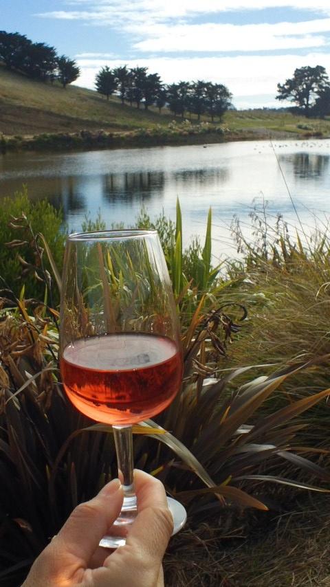 Enjoying a glass of Rose beside a wetlands at Yealands Estate in Marlborough, New Zealand.