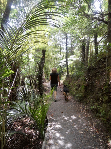 Mair Park - amazing native bush walks, river, picnic spots and Mt Parahaki lookout - leads right through to AH Reed Kauri walkway and the Whangarei Falls
