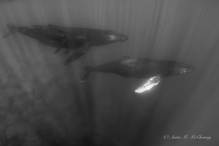 Whales encounter during WEPA expedition #WEPAwhales