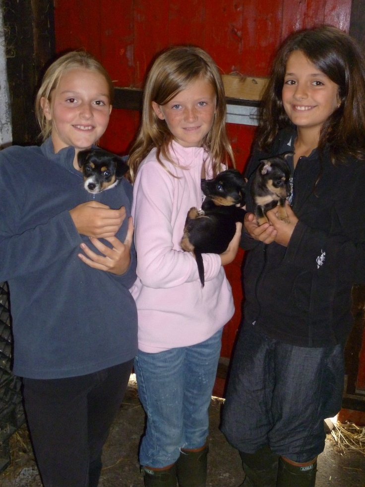 Cuddle the puppies but no sneaking them home under your jumpers :-)