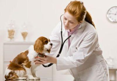 Il 24 marzo visite veterinarie gratuite a Caserta