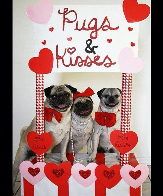 What's better than hugs and kisses? Yup, you guessed it—pugs and kisses!