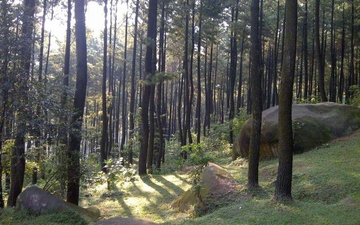 Gunung Pancar Segarnya Wisata Alam Kekinian di Jawa Barat - Jawa Barat
