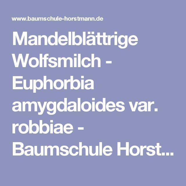 Mandelblättrige Wolfsmilch - Euphorbia amygdaloides var. robbiae - Baumschule Horstmann unter Nussbaum