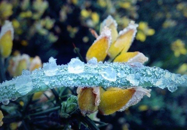 20150907 -  cidade de São Joaquim, na Serra Catarinense, registrou 3.5ºC na madrugada desta segunda-feira (7) feriado da Independência do Brasil. PICTURE: Mycchel Hudsonn Legnaghi/São Joaquim Online