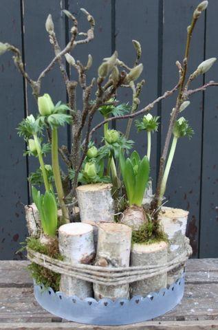 dunne stammetjes met lente takken anemoon magnolia op dienblad