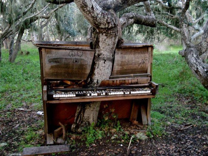 """Дерево, которой проросло через выброшенное фортепиано. Эта фотография дерева была сделана пользователем Flickr еще в 2010 году, а позже фортепиано было """"пририсовано"""" художником по имени Джефф."""