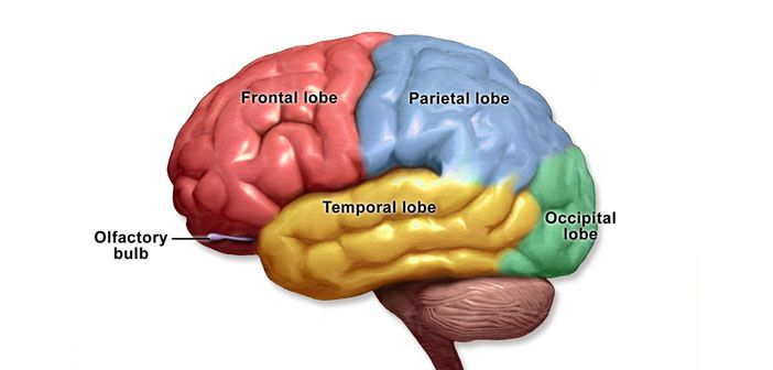 The stress hormone cortisol strengthens memories of scary experiences. However, it is effective not only while the memory is being formed for the first tim ...