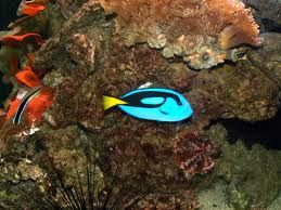 fish of the great barrier reef - Google Search