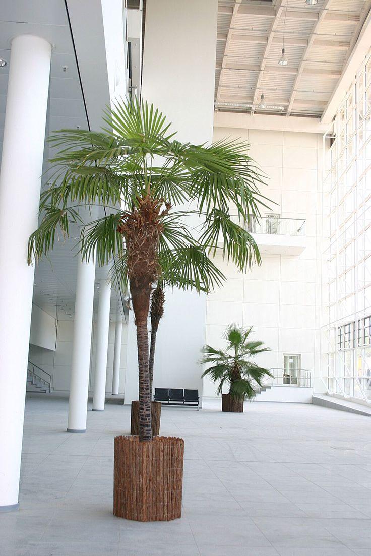Palme Mit Ummantelung Hamburg Messe Dekoration