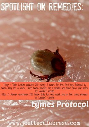 Protocol for Lyme Disease Using Homeopathy   lyme   Holistic