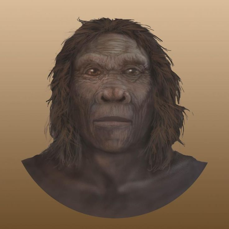 Homo habilis face illustration, front view