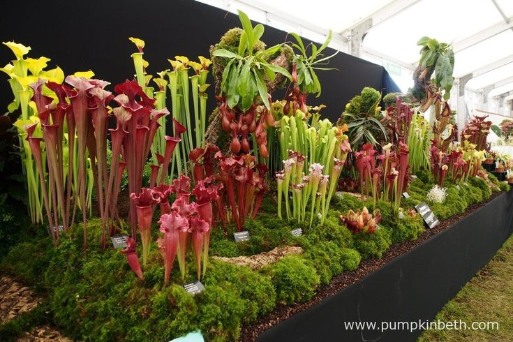 The RHS judges awarded Hampshire Carnivorous Plants a Gold Medal, at the RHS…