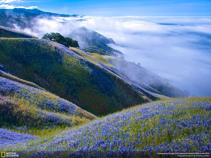 21 Of The Best Nature Photo Entries To The 2014 National Geographic Photo Contest: Location: Big Sur, California