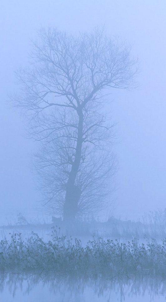 Foggy.. Lake Taka, Arcadia (Peloponnese), Greece   by ARCADIAimages