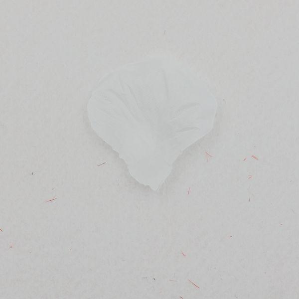 Witte rozenblaadjes #rozenblaadjes #bruiloft #liefde