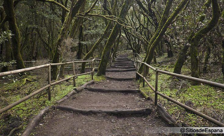 Parque Nacional de Garajonay, naturaleza ancestral en La Gomera (#Canarias): http://bit.ly/SLx3Ym #Spain