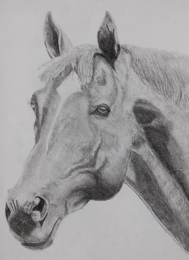 1er caballo ,carboncillo