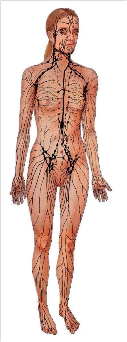 Lymfatické cesty