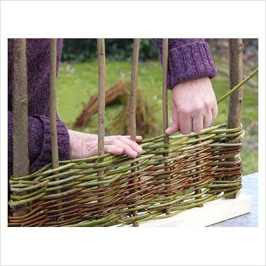 GAP Photos - Garden  Plant Picture Library - Making a willow fence for spring garden bed - GAP Photos - Specialising in horticultural photography