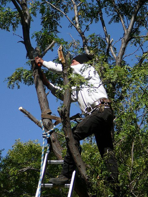Some of our work  Caboolture tree removal.  Tree lopping and tree servicng 167 Bellini Rd Burpengary QLD 4505 0736678052 www.caboolturetreeremoval.com