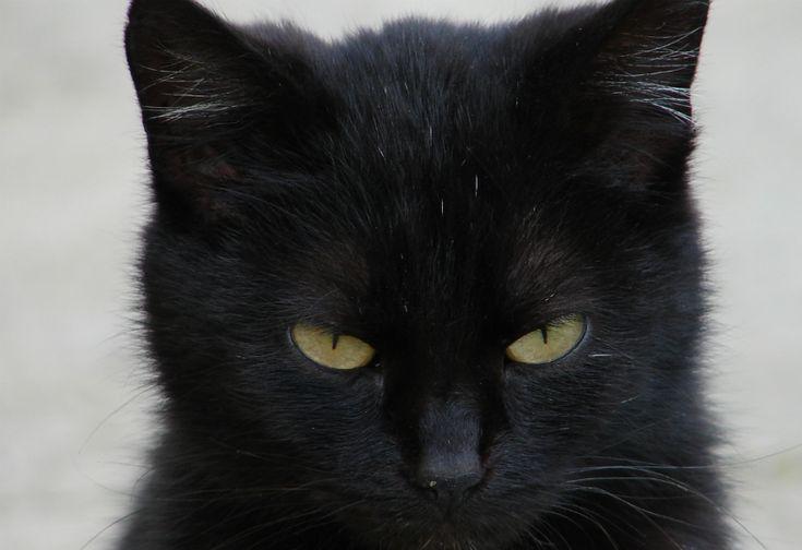 Kucing Ini Selamatkan Majikan dari Serangan Ular Berbisa