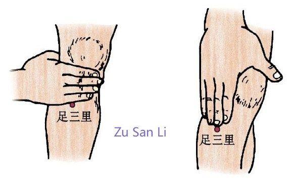 36E : Zu San Li (36 Estomac) -> Le point le plus important pour l'entretient de la santé...