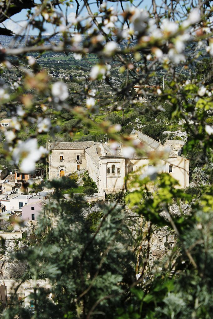 Spring almond blossom and artemesia with view of a church in Scicli, Sicily