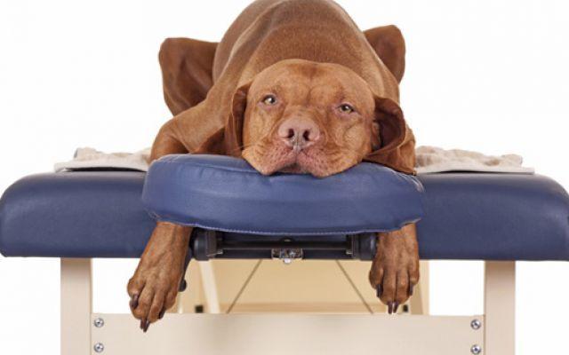 Come massaggiare il tuo cane - Silvia Cattani #cane #cani #massaggio #massaggi