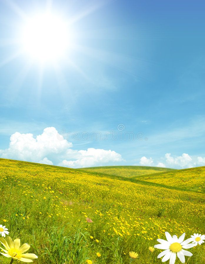 Sunny Landscape Sunny Field With Yellow Flower Affiliate Landscape Sunny Field Flower Yellow Ad Landscape Stock Images Free Stock Images