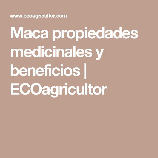 Maca propiedades medicinales y beneficios   ECOagricultor