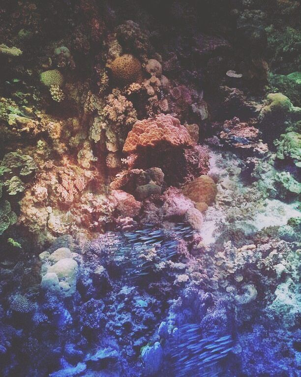 Epic Today I went to see the spectacular degree panorama of the Great Barrier Reef by artist Yadegar Asisi exhibited at the Panometer Leipzig a former gas