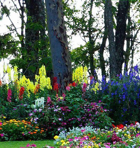 цветы под деревьями