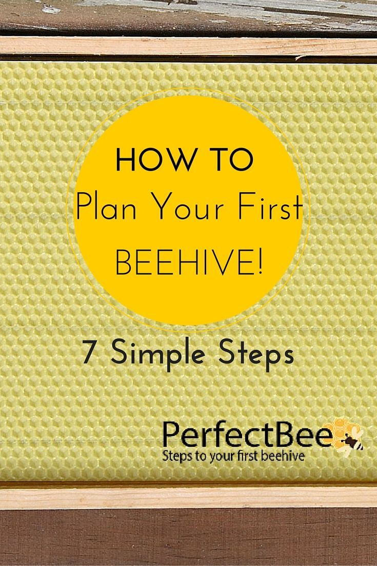 7 Steps to Your First Beehive! Get on the road to beekeeping success with this article!