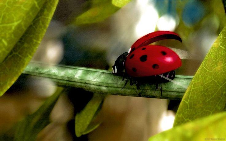52 best ladybugs images on pinterest