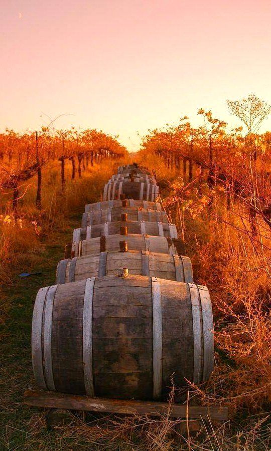 Autumn Pictures - Fall Pictures - Autumn in Tuscany, Italy decorate with wine barrels