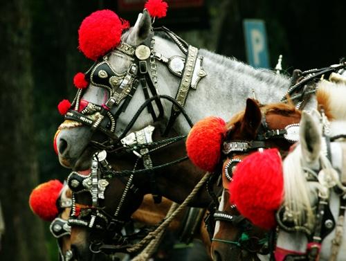 kuda-bukittinggi