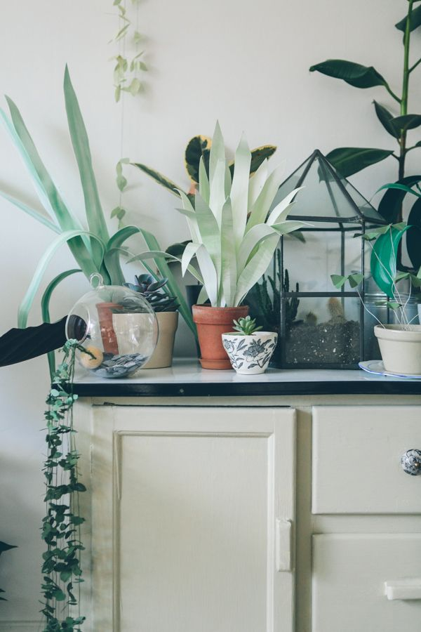 A mixture of paper plants and real plants made by Lora Avedian photographed by India Hobson Please contact Loraavedian@gmail.com if you would like to use this image