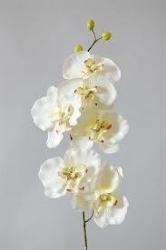 Vereniging voor orchideeën