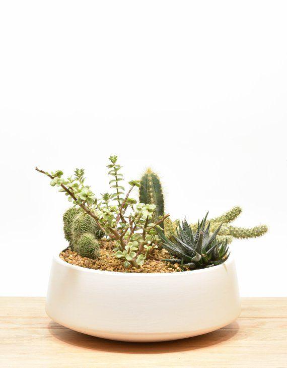 Strange Succulent Planter Succulent Bowl Tabletop Succulent Interior Design Ideas Apansoteloinfo